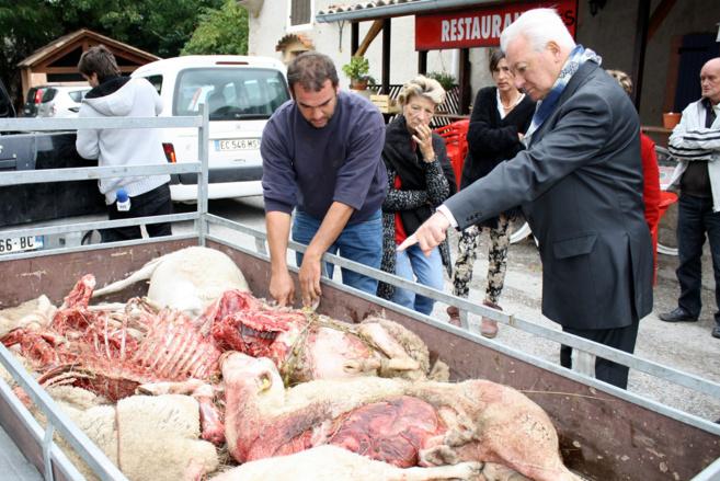 Un troupeau de moutons sauvagement attaqué à Authon