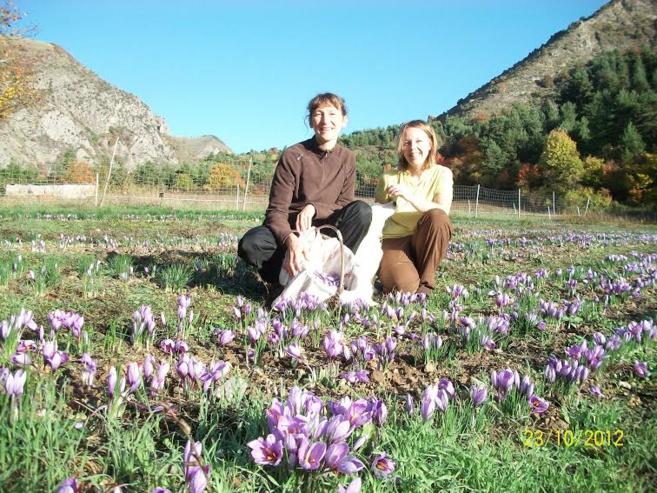Rose-Marie Garcin cultive le safran à Bayons