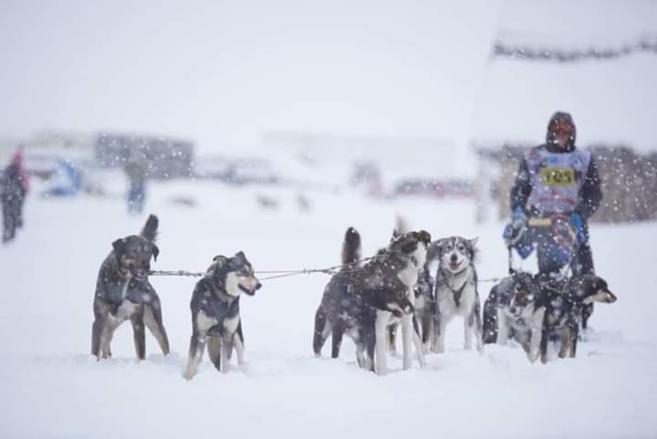 Un musher haut-alpin remporte la Vercors Quest 300 !