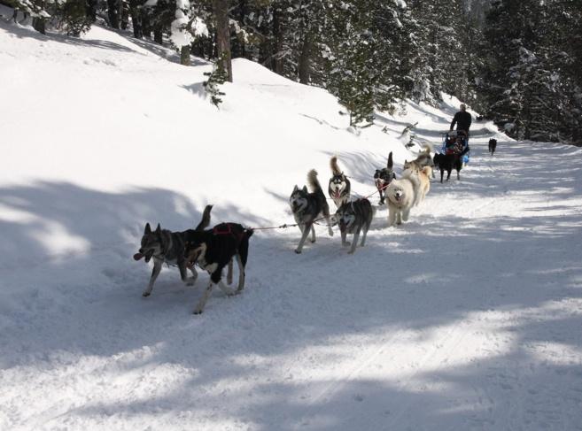 Nanook, la magie et la tendresse des chiens de traineau