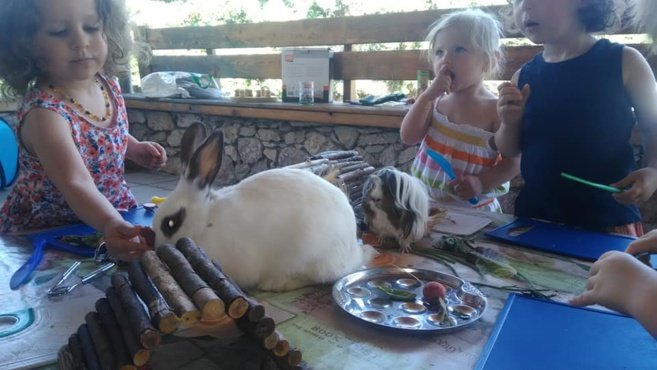 L'instant animal, c'est vraiment nos amis les bêtes