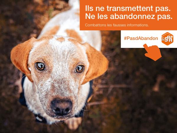 Un appel au bon sens de la Société Protectrice des Animaux pendant le COVID-19