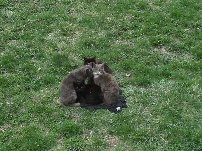 L'association Sos chats des rues du Briançonnais poursuit ses actions