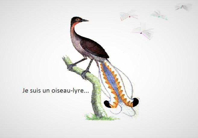 Je suis un oiseau-lyre # Apologie des oisifs