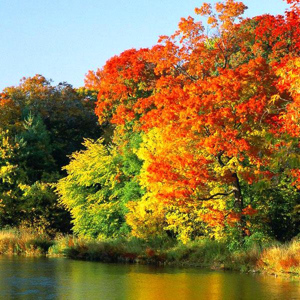 Pourquoi les feuilles des arbres changent elles de couleurs en automne ..
