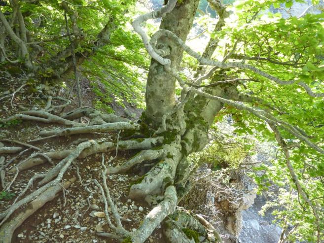 5 massifs forestiers vont être étudiés ce weekend