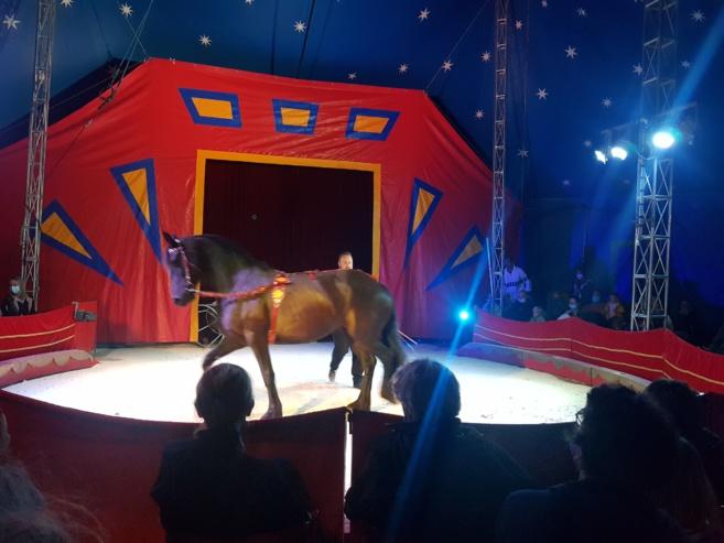 Venez rêver les yeux ouverts au cirque l'Eden Circus !