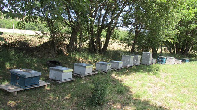 Pour éviter d'avoir le bourdon et des ruches volées les apiculteurs s'unissent aux gendarmes