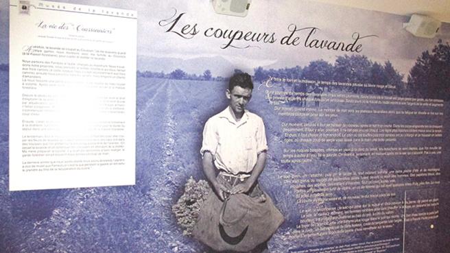Un musée son et lumière dédié à l'or bleu de Provence à Digne