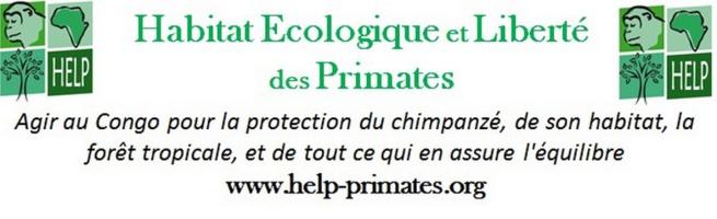 Les chimpanzés envahissent la MJC de Briançon…