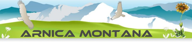 Arnica Montana, protection de la nature du 05 mais pas à dose homéopathique