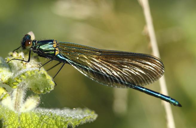 La LPO dévoile le monde des libellules