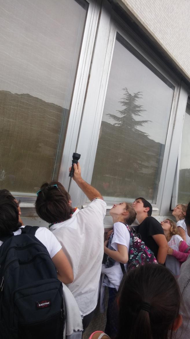 Les élèves découvrent les Molosses de Cestoni