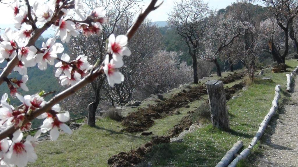 Village perché du Haut-Var, Bargème embellit ses restanques de plantations rustiques