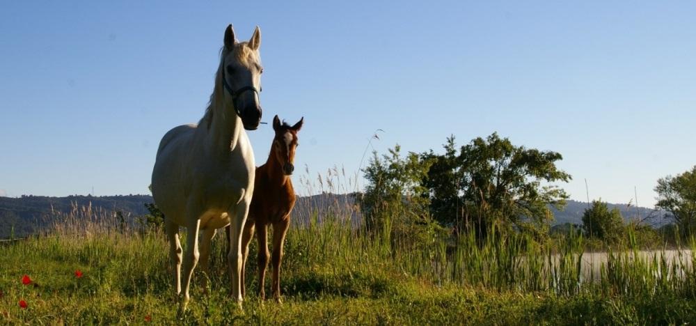 A pied, à cheval et à vélo, l'endurance dans tous ses états