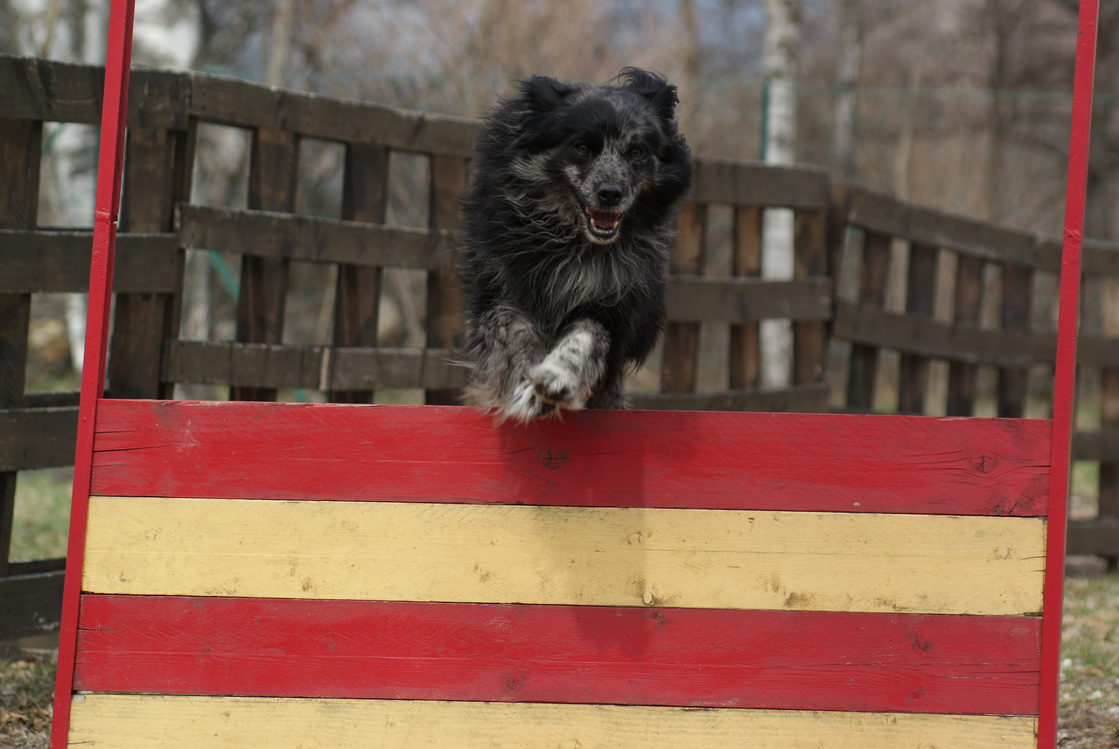 Une Asso qui a du chien… forcément !