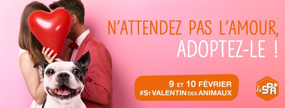 La SPA de Briançon va fêter la Saint-Valentin des Animaux