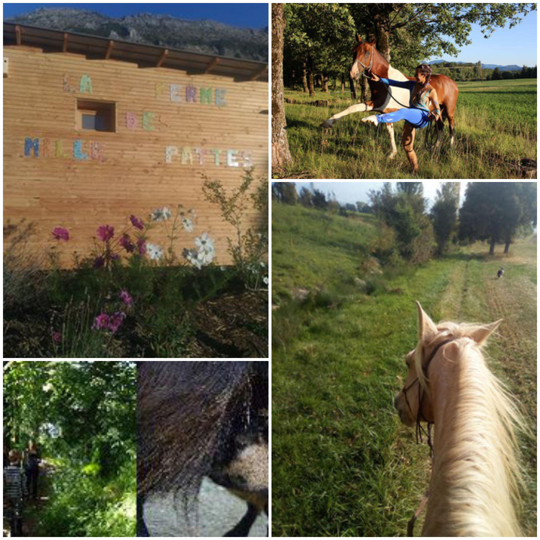 La Ferme des Mille Pattes, royaume du cheval à Gap !