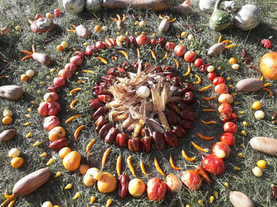 Sylvain Musseri «Seed saver»...