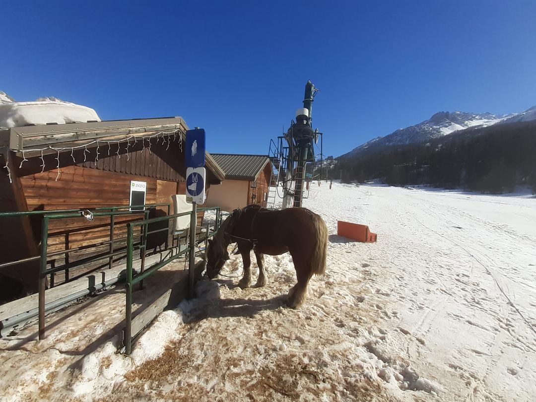 Les chevaux assurent les remontées mécaniques à Monêtier-les-Bains