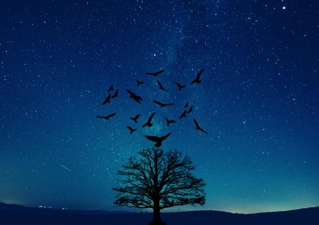 """A la découverte du """"peuple du ciel"""""""