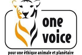 One voice 04-05 : Manifestation à Forcalquier Lundi prochain de 10h00 à 13h00