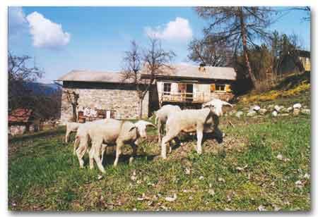 Plusieurs fermes du 05 participent au week-end « Brin de Culture »