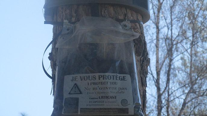 Digne déclare une guerre écologique contre les chenilles processionnaires.