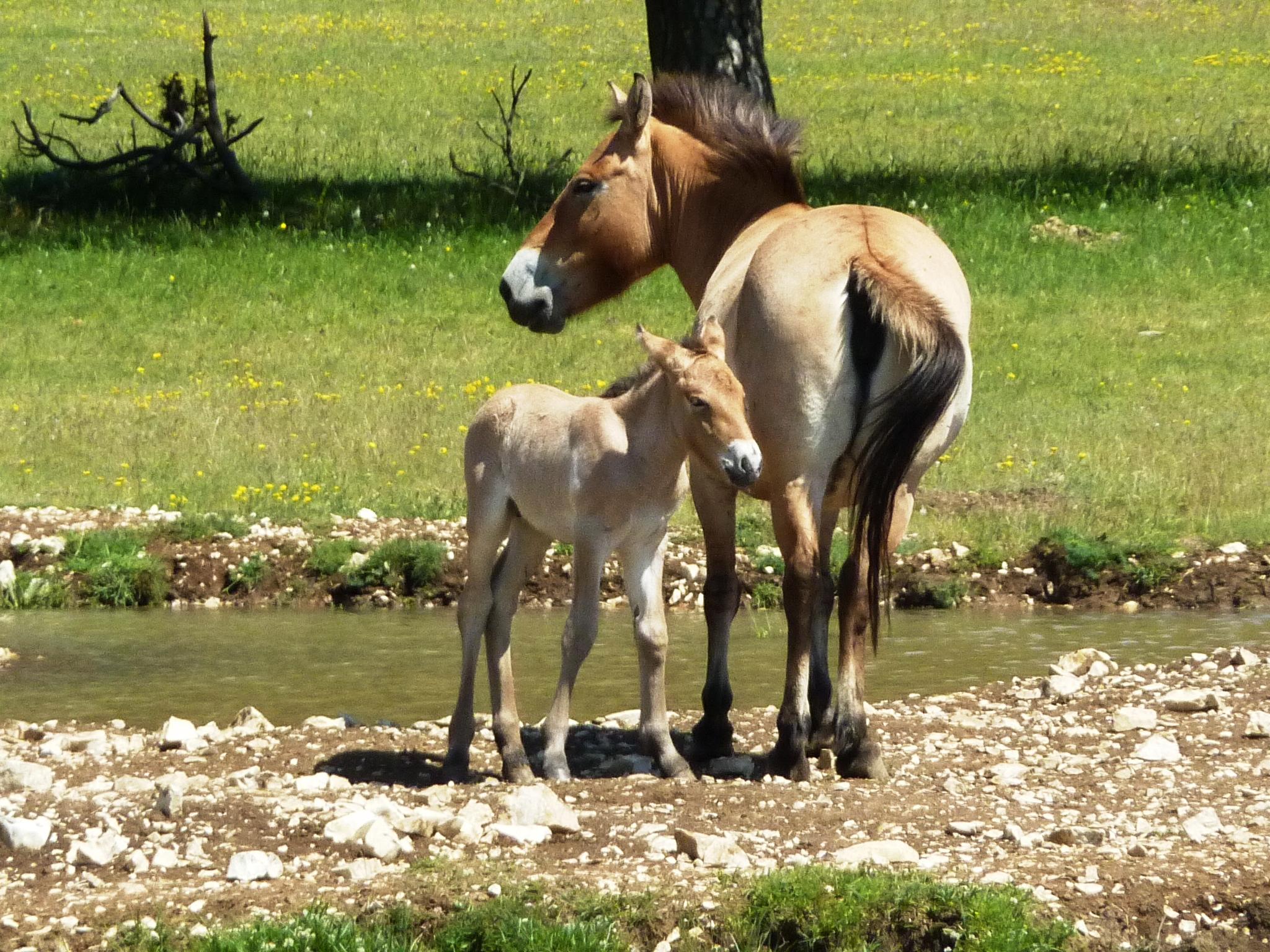 A Thorenc, près de Castellane rencontre avec un vétérinaire très singulier
