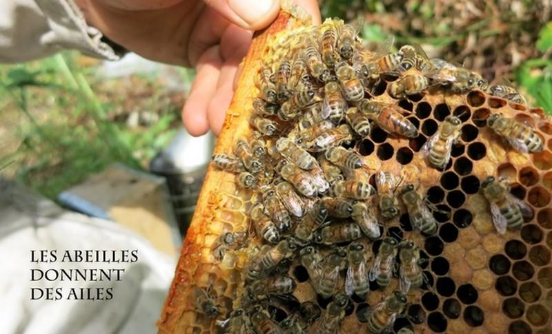 Les abeilles lui donnent des ailes