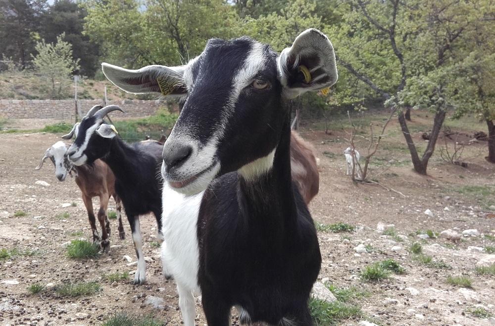 """L'opération """"De ferme en ferme"""" a fait étape à Moustiers"""