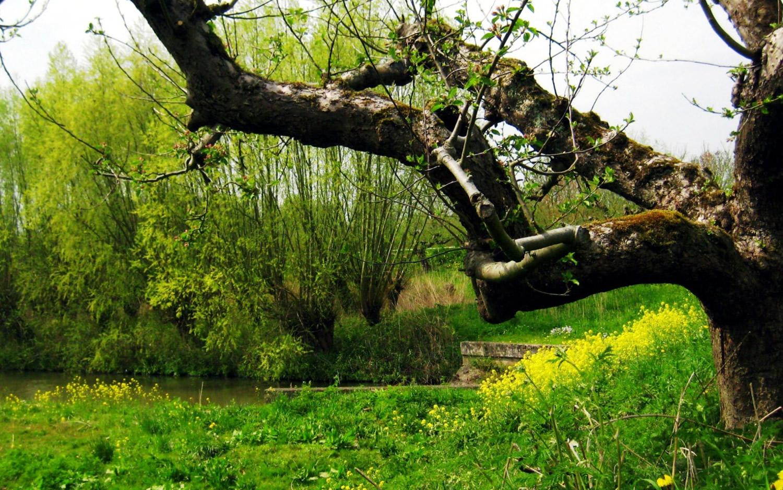 La fête de la nature aura lieu prochainement à Ribiers !