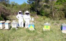 Amapi 04 entretient la passion des abeilles