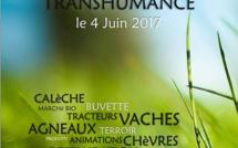 Ce dimanche c'est jour de transhumance à Bargème