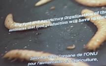 Les insectes, une voie alimentaire à explorer et développer