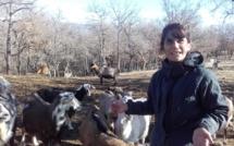 A Roumoules, les chèvres d'Aurélie sont privées de sortie !