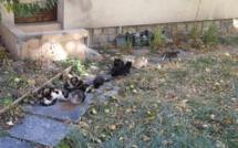 Comment limiter la prolifération de chats errants à Briançon ?