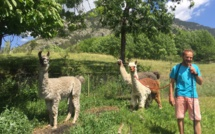 Promenade en lamas à Villard Saint-Pancrace