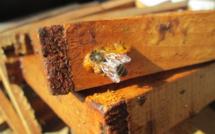 Partons à la découverte du monde fascinant des abeilles