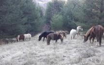 Des jeunes enfants cavaliers !