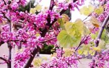 Dans les jardins secrets de Cath & Rina