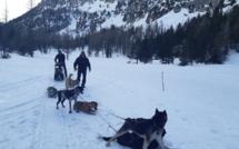 Essayez-vous à la conduite d'attelage de chiens de traineau