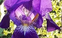 L'arrivée du Printemps Flowers by Caro 1