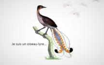 Je suis un oiseau-lyre # Nouvelles de Dino Buzzati