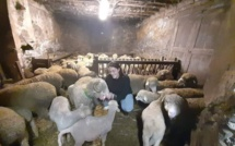 Rencontre avec notre 2 ème dauphine de miss agricole dans sa bergerie