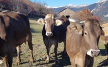 Visite de la ferme de Pralong à Puy-Saint-Pierre