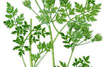 Les Chroniques de Caro - Les légumes d'antan...