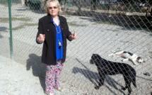 Le refuge SPA de Sisteron a ouvert ses portes lors de la Fête des animaux !