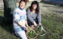L'association Mille et une feuilles 04 propose de partir à la découverte des plantes sauvages !