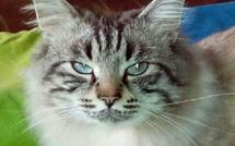Les Germaines ont besoin de vous : l'association receuille et stérilise les chats errants